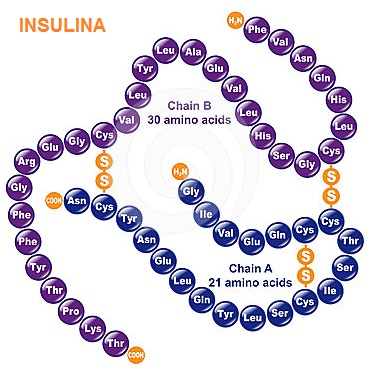 Insulina | Diabetes y Embarazo